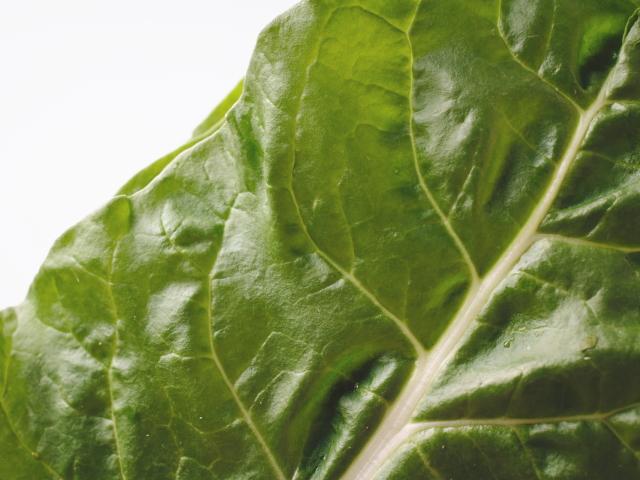 緑葉色野菜の女王ケール