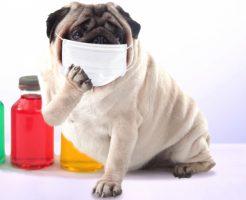 びわ灸で花粉症対策